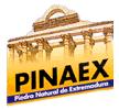 pinaex