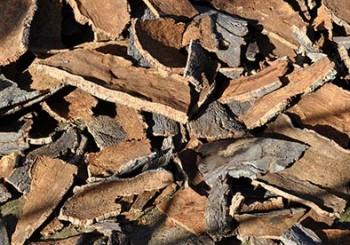 Una tesis de la Universidad de Extremadura propone el uso de residuos del corcho como material acústico de construcción